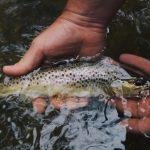 fische-fangen