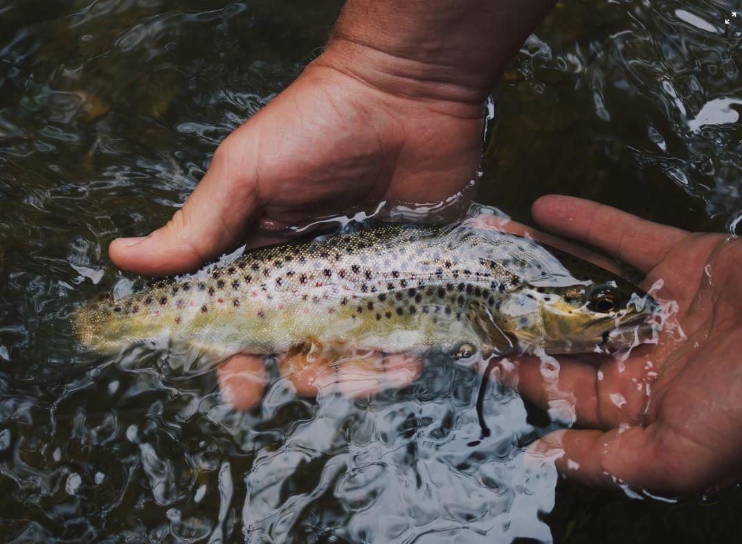 Fische fangen und freilassen