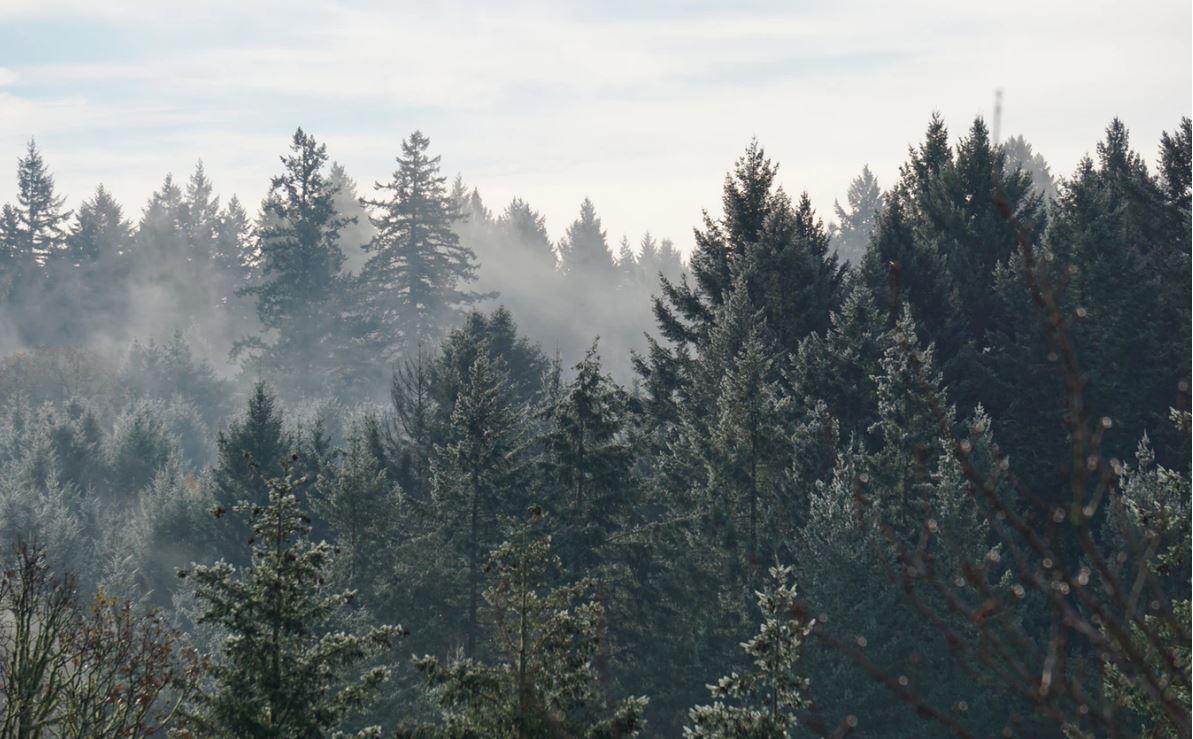 Ist Zelten im Wald gefährlich?