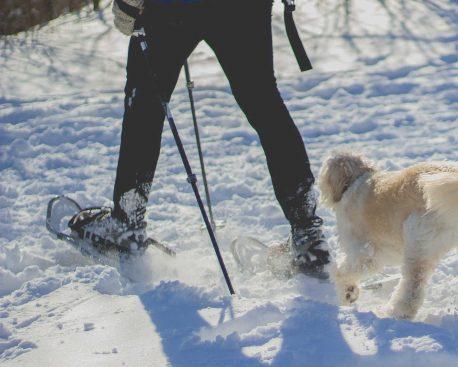 Wandern im Schnee – Schneeschuhwandern