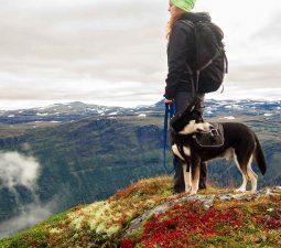 Wandern mit Hund: So gelingt das perfekte Outdoor Erlebnis