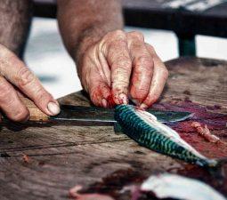 Fisch zerlegen: Fisch ausnehmen für Angel Anfänger