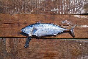 fisch zerlegen