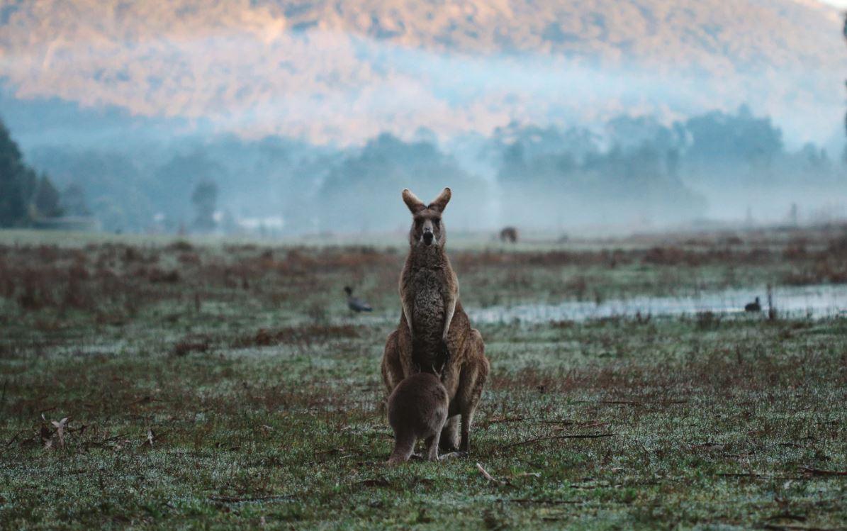 Gefährliche Tiere in Australien