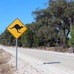 Tiere Australien