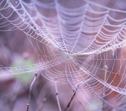 Australien: So schützen Sie sich vor Spinnen