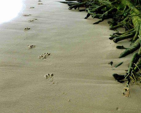 Tierfähren lesen – Tierspuren erkennen
