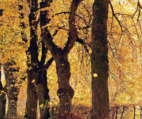 Camping im Herbst: Ab in die Herbstsaison