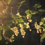 essbare-pflanzen-survival-nahrung