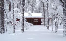 Hütte im schneebedeckten Wald