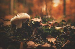 Pilzbestimmung - Welche Pilze kann ich gefahrlos sammeln?