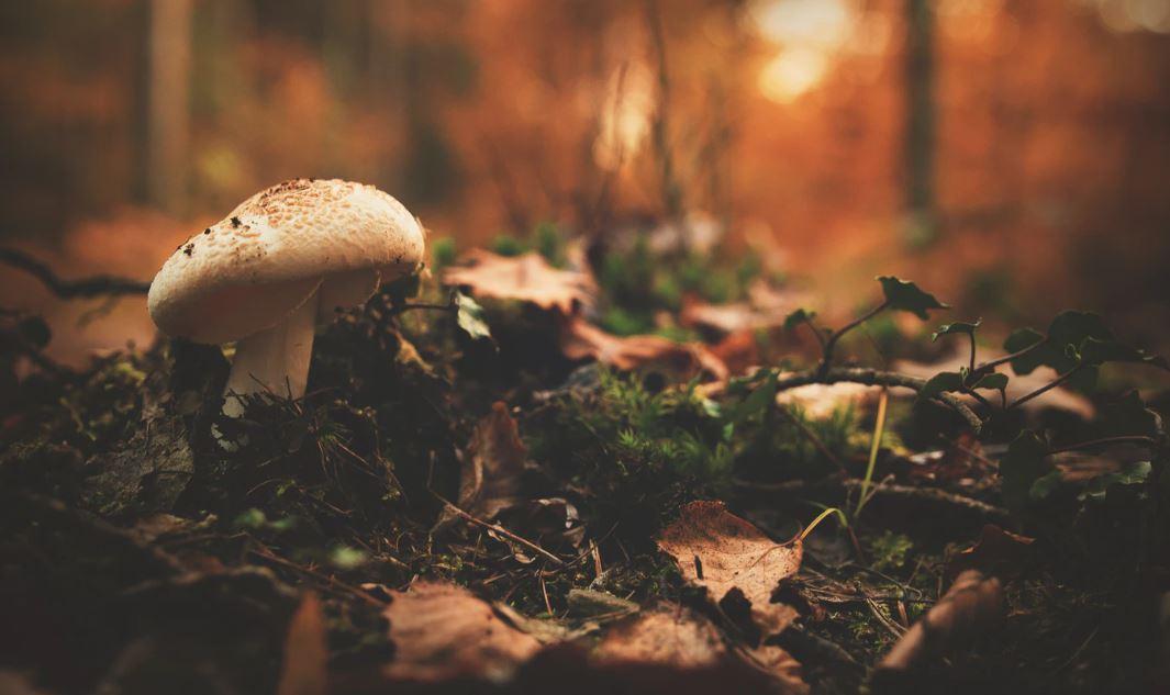 Pilzbestimmung – Welche Pilze kann ich gefahrlos sammeln?