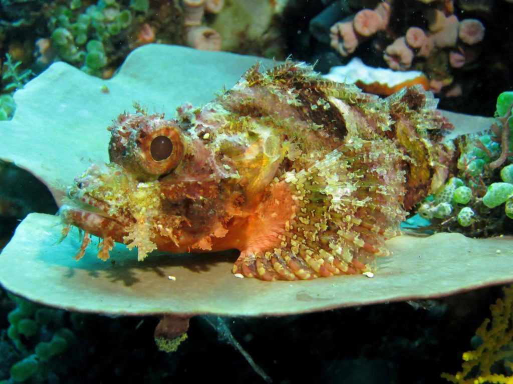 Steinfisch-gefährlich