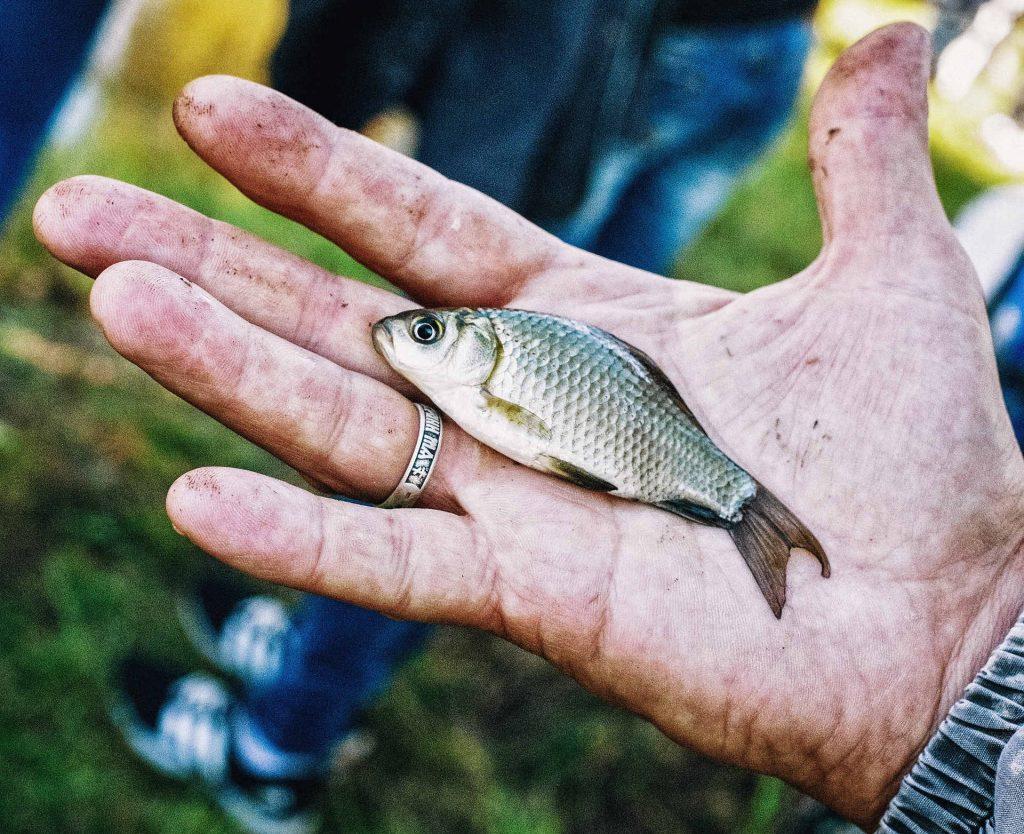 fische-fangen-und-freilassen