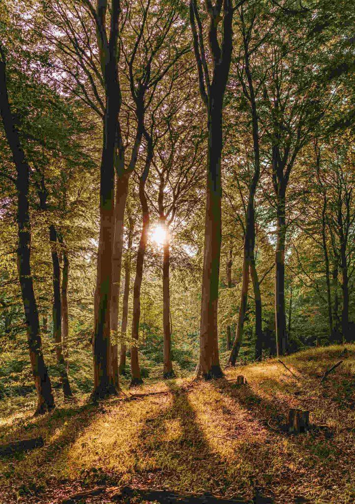 buchenwald-jasmund-nationalpark